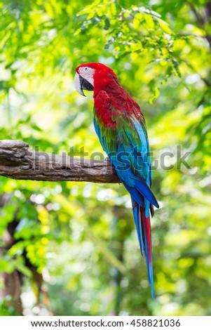 Close up colorful macaw parrot in flower garden