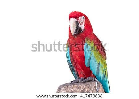 Close up colorful  parrot macaw isolated on white background - stock photo