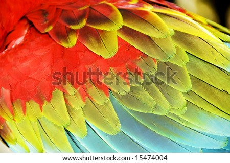 Close up colourful wings of macaw - stock photo
