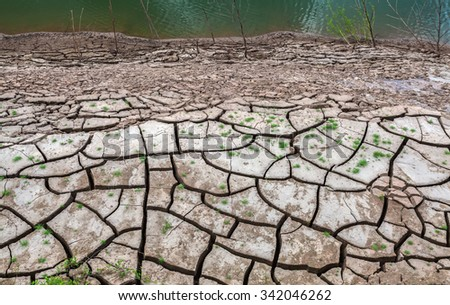 Close up cracked earth near drying water and dry tree on twilight at at Sam Pan Bok in Mekong river. Ubonratchathani Province ,Thailand