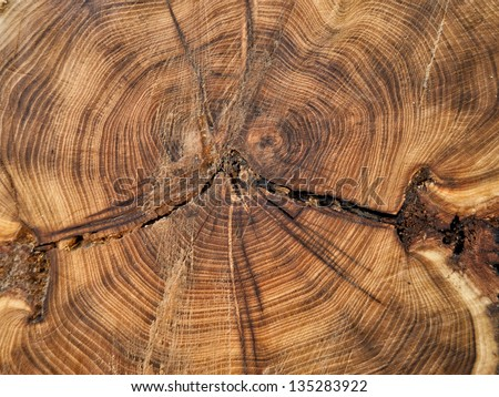 Close up cross section of tree trunk showing growth rings, texture - stock photo