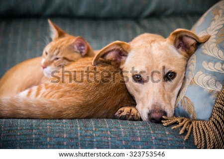 close up, cute cat and dog together lying in the bed