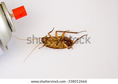 Close up dead cockroach isolated on white background, Roach died as a pesticide. ( Cockroaches as carriers of disease ) - stock photo
