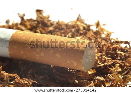Close-up detail of cigarette filter on tobacco isolated on white backround - stock photo