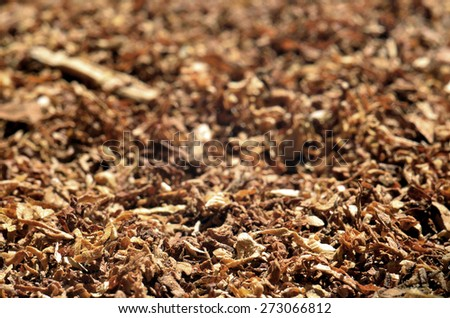 Close-up detail of cigarette tobacco background - stock photo