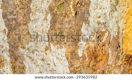 Close up detail of textured bark of an Australian gum tree in Victoria - stock photo