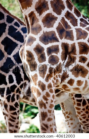 Close-up detail of the pattern of a giraffe - stock photo