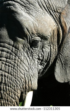 Close up detailed image of the beautiful textures of an adult elephant's head
