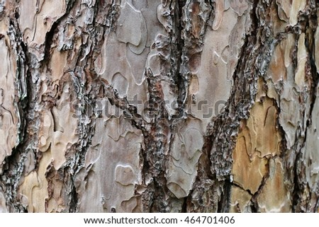 Close up details trunk of a pine tree, surface of bark