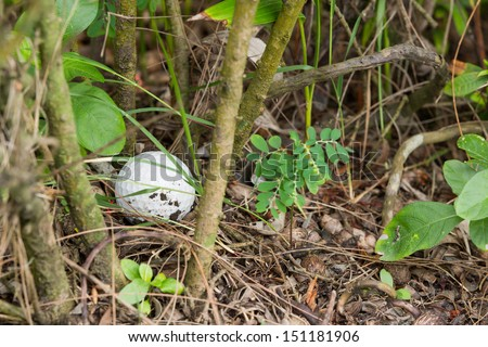 Close up dirty Golf ball in the bush - stock photo