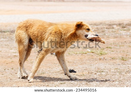 Close up dirty stray dog hold the bone in mouth - stock photo