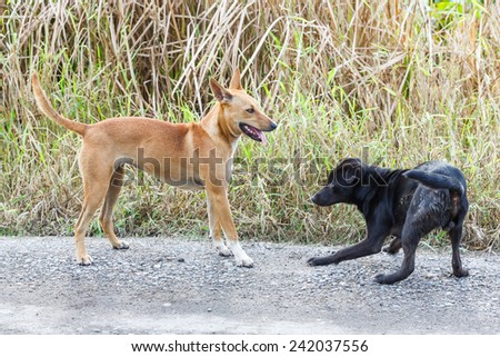 Close up dirty stray dogs playing together on street at day time - stock photo
