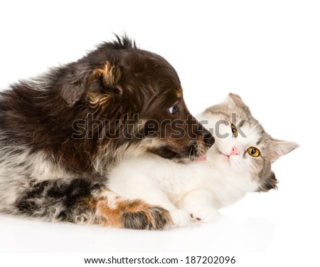 close up dog kisses cat. isolated on white background