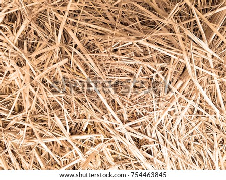 Close Up Dry Grass Texture In Country Farm The Is Background