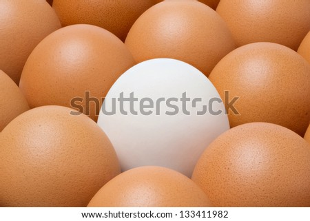 Close up Duck egg among chicken eggs - stock photo