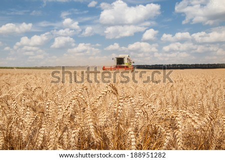 close-up ears of wheat at field and harvesting machine on background - stock photo
