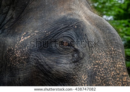 Close up elephant face  - stock photo