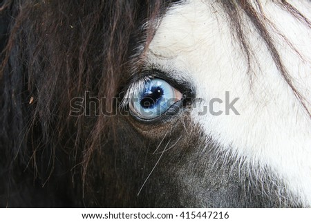 Close up eye of the horse. Horse with Blue Eyes. - stock photo