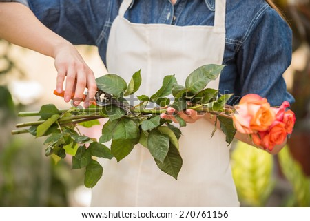 Close-up. Female florist cutting rose with tongs in shop. - stock photo