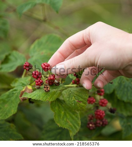 Close up female hands picking fruit in forest - stock photo
