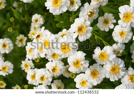close-up flower bed with white flowers