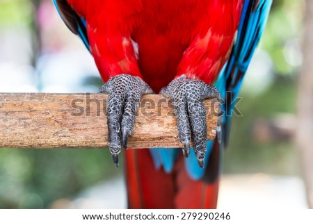 Close up foot ofl macaws bird, in a zoo - stock photo
