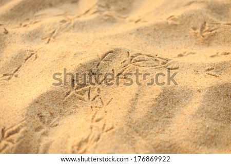 Close up footprints of a bird on the beach - stock photo