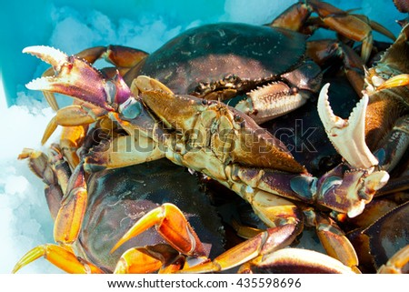 close up fresh Alaskan Crabs are preserved in ice. - stock photo
