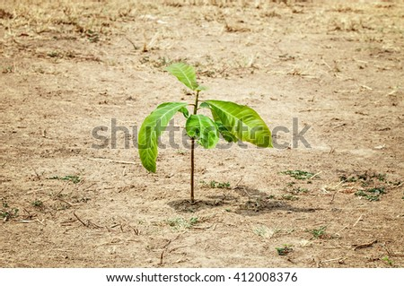 Close up Fresh green leaf plants on the field in spring, selective focus - stock photo