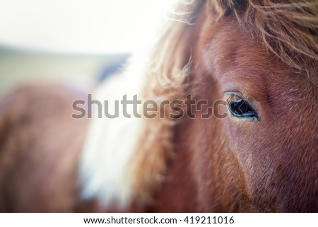 Close-up from a horse. - stock photo