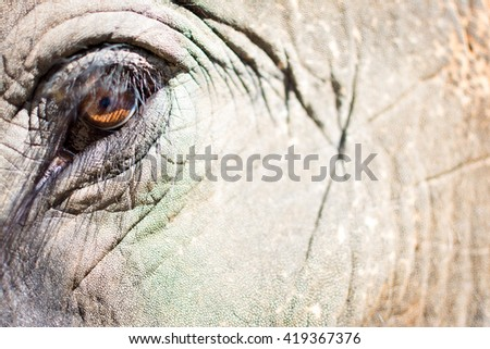 Close-up from an elephant. - stock photo