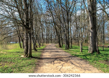 Close up front view of pathway among trees in forest, on cloudy blue sky background. - stock photo