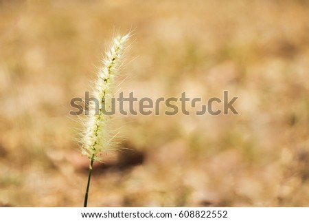 Close-up grass flower against blur nature background. Selective focus.