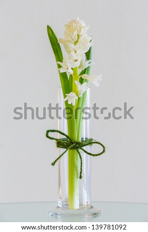 Close up green color flower in glass vase