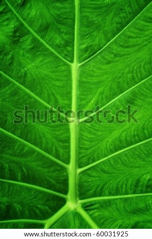 Close up green color leap pattern - stock photo
