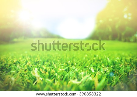Close up green grass field with blur park background,Spring and summer concept,vintage filter - stock photo