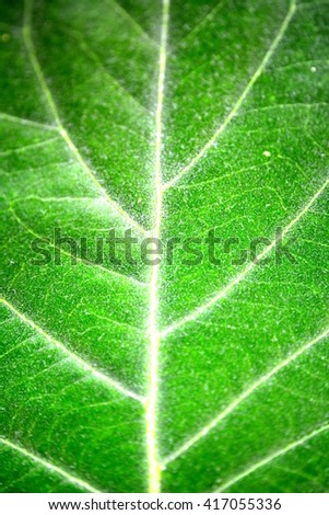 Close up green leaf - stock photo