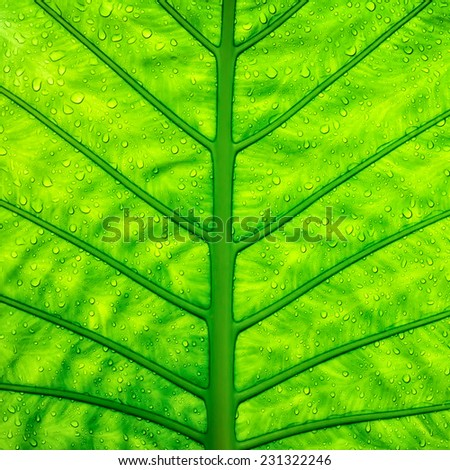 Close up green leaf texture with water dew drops. Ecology and care concept - stock photo