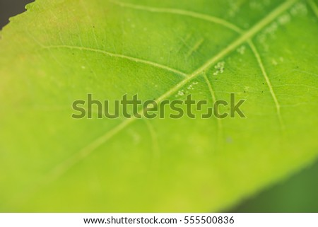 close up green leaf with selected focus