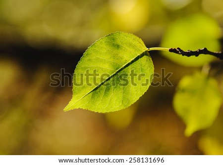 Close up green leave background. Spring time - stock photo