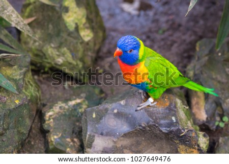 close up green lory parrot on rock in park