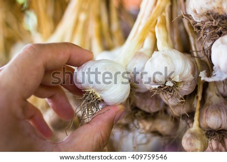 Close up hand hold thai garlic bulbs and garlic cloves on background - stock photo
