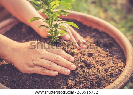 Close up Hand holding young lime tree on soil, Retro filter effect - stock photo