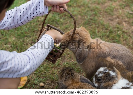 close up hand woman feeding rabbits, Vegetable