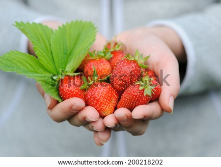 Close-up hands holding fresh strawberries