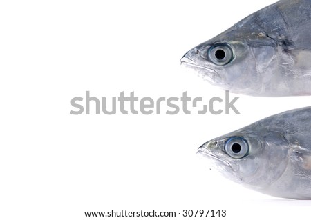 Close up head of two fish