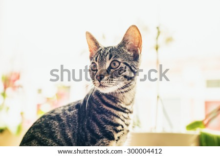 Close up head portrait of an alert curious cat sitting in front of a high key windows indoors in a house staring intently back to the left of the frame - stock photo