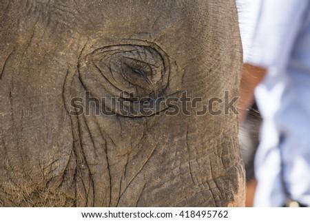 Close up head shot of sad elephant - stock photo