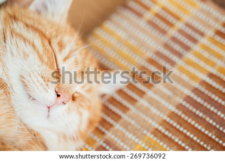 Close Up Head, Snout Of Peaceful Orange Red Tabby Cat Male Kitten - stock photo