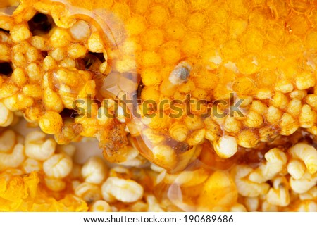 Close up honey comb with larvae of bees and honey - stock photo